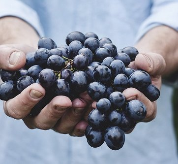 Format_Grapes